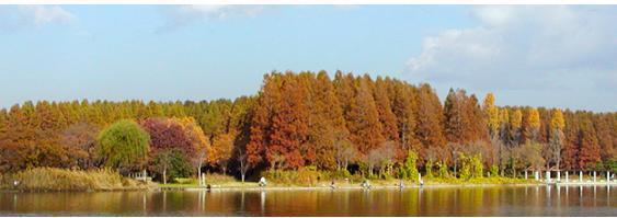 水元公園 image