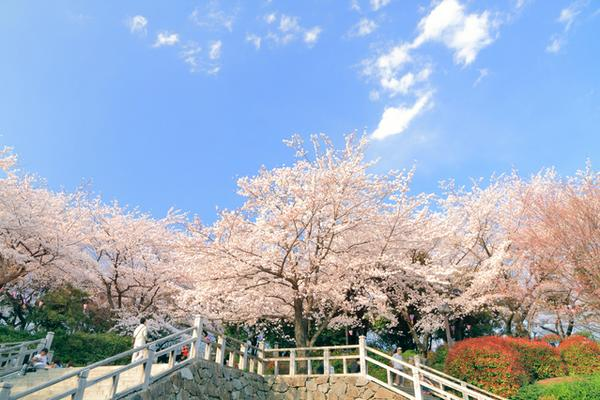 飛鳥山公園 image
