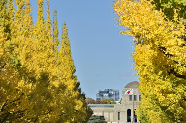 Meijijingu Gaien, Ginko Trees image