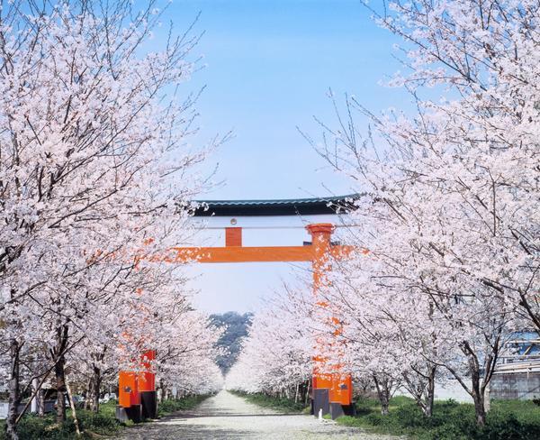 新田神社 image