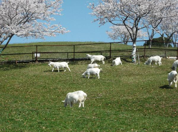 千葉県酪農のさと image