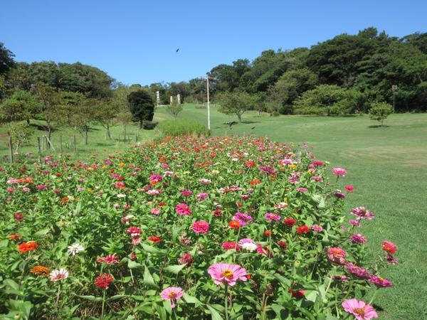 縣立觀音崎公園 image