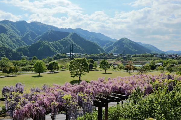 宮ヶ瀬湖畔園地 image