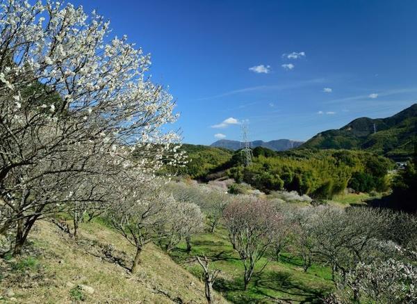 三岳梅林公園 image