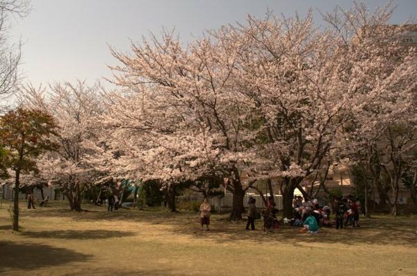 佐世保公園 image
