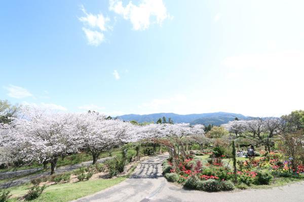 鹿屋市霧島ヶ丘公園 image