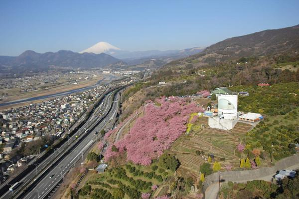 松田山香草園 image