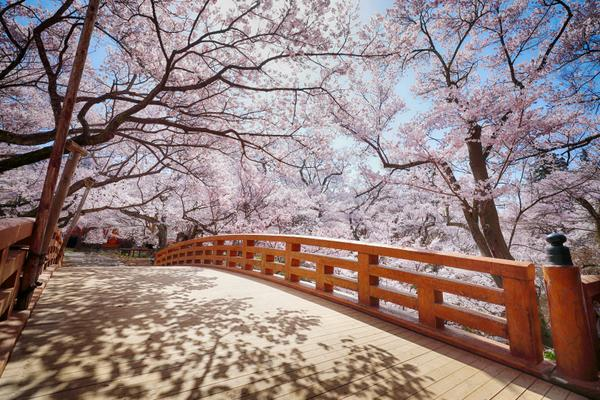 高遠城遺跡(高遠城址公園) image