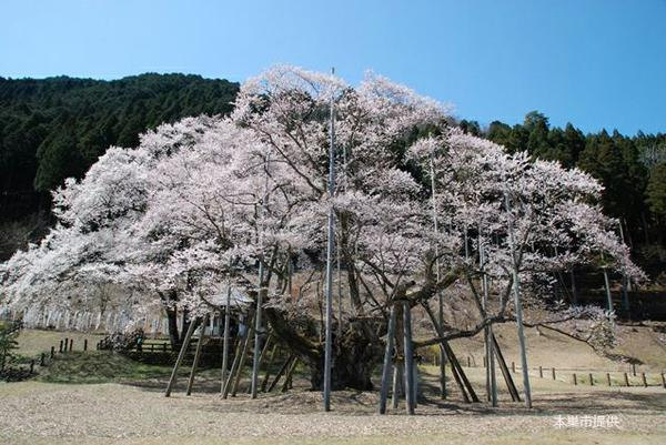 สวนสาธารณะอุซูซูมิ image