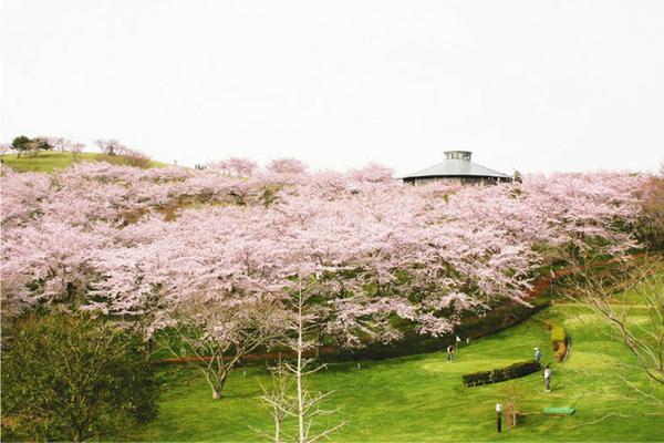 加護坊山の千本桜 image