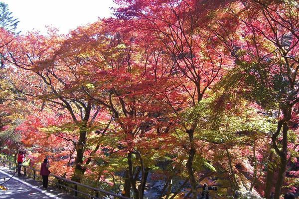 夏井川渓谷 image