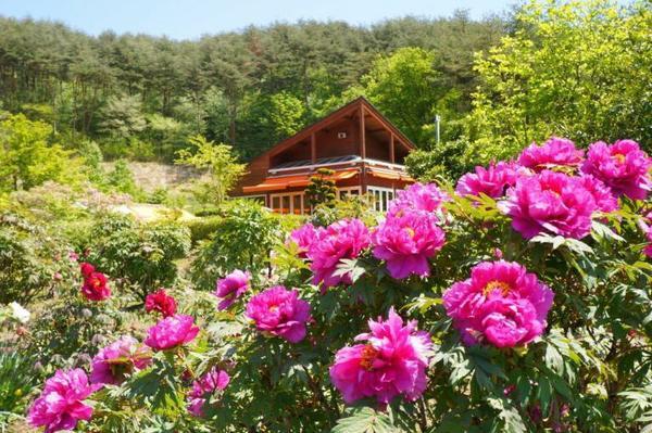 花と泉の公園 image