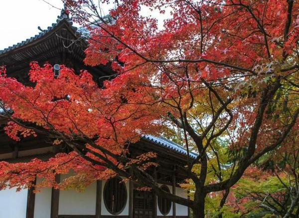 井山宝福寺 image