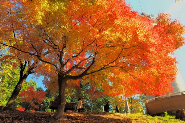 最上山公園(もみじ山) image