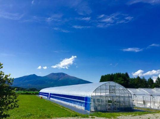 軽井沢ガーデンファーム いちご園 image