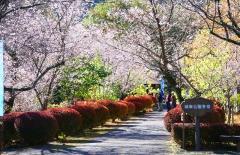 城峯公園 image