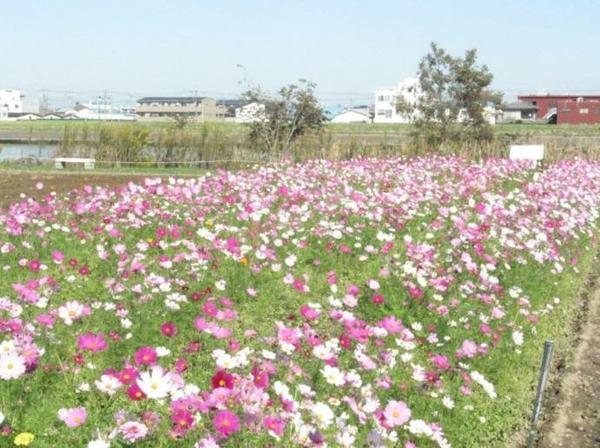 中川やしおフラワーパーク image