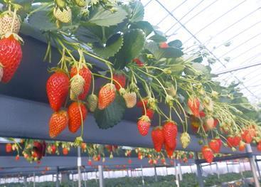 ハッピー農園 image