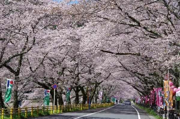 이에야마 벚꽃 터널과 그 주변 image