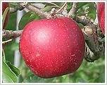 荒牧りんご園 image