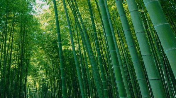 若竹の杜 若山農場 image