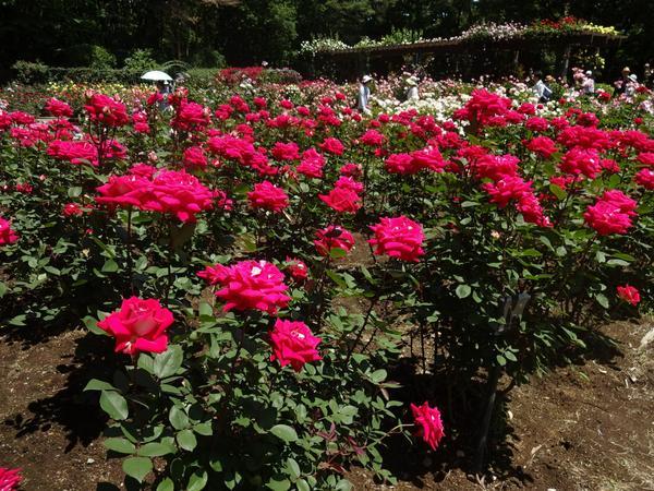 栃木県 井頭公園 image