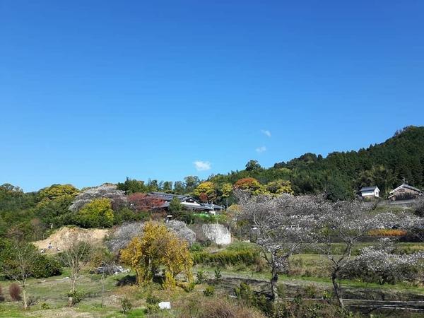 天理観光農園 image