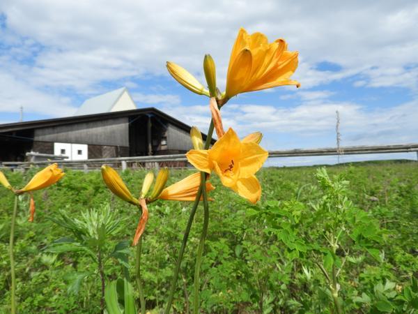 サロマ湖ワッカ原生花園(龍宮街道) image