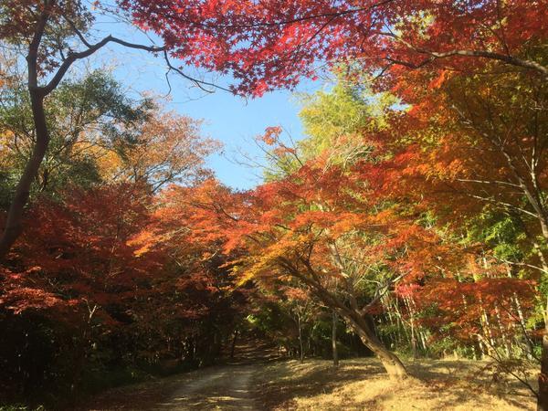 オレンジラインハイキングコース image
