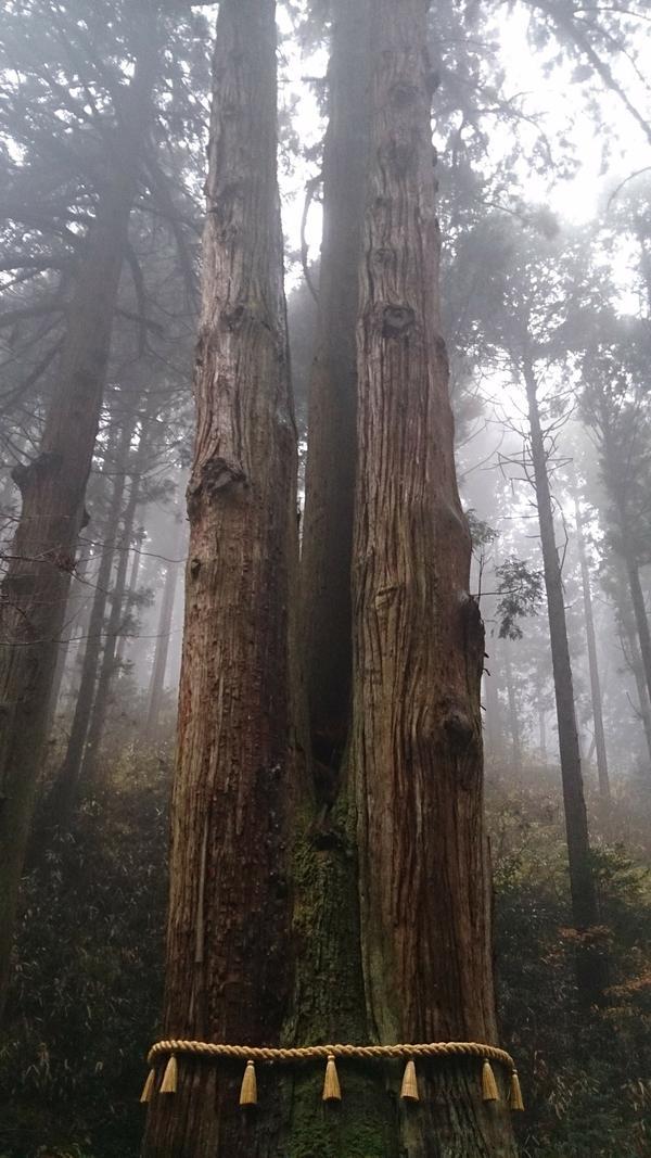 御岩山三本杉 image