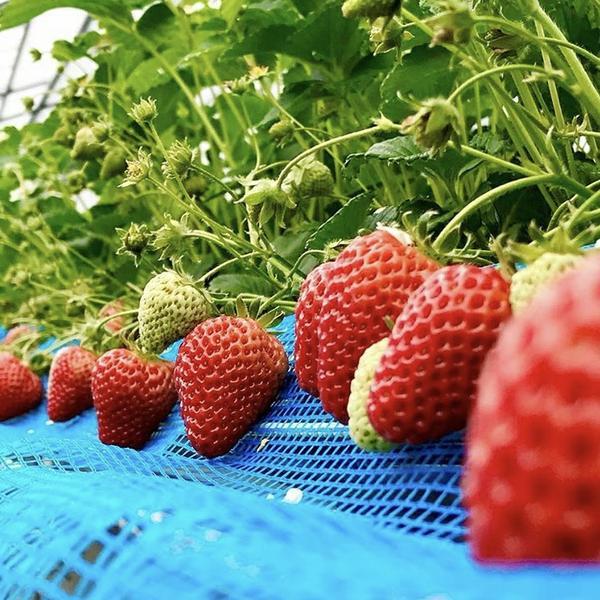 川崎 千葉農園 image