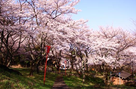 สวนสาธารณะโยชิดะเดคิยามะ image
