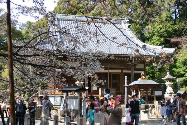 ชูโจฮิเมะเซกันซากุระ image