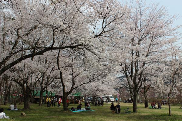 สวนสาธารณะซากุราโนะ image