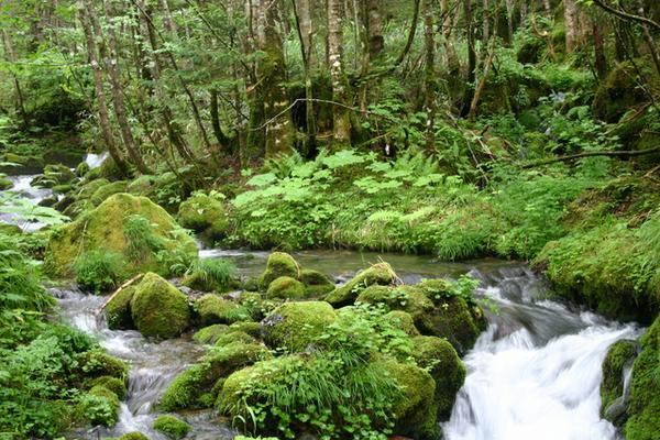 乗鞍山麓 五色ヶ原の森 image