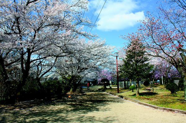 虎渓公園 image