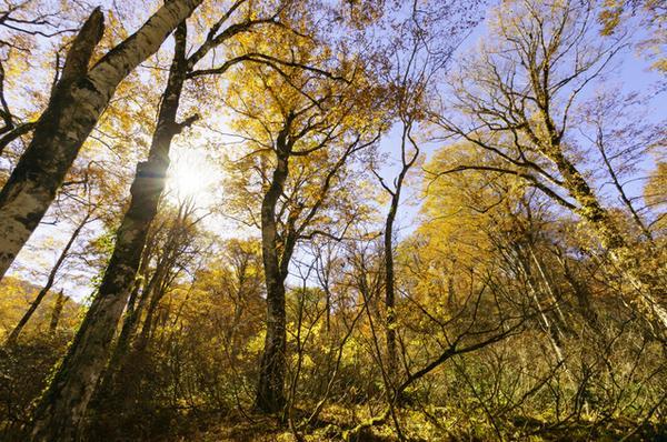 天生県立自然公園 image
