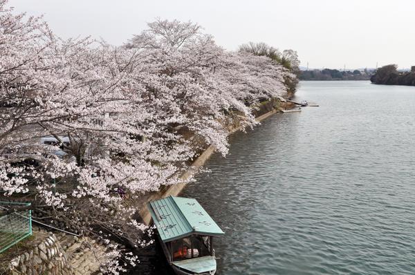 小山観音・小山公園 image
