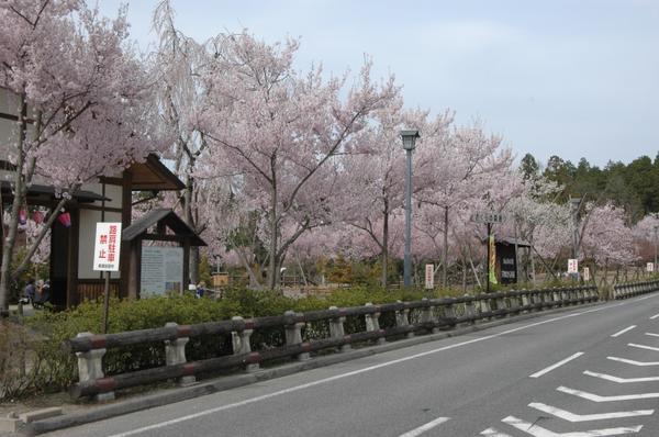 東山森林公園 下米田さくらの森 image