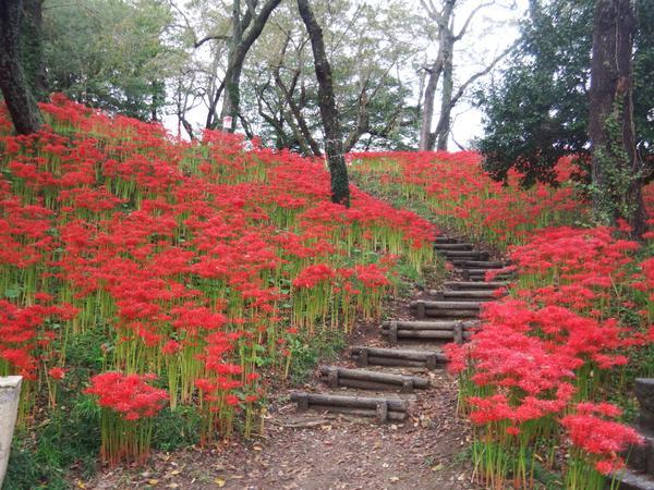 สวนสาธารณะฮางุโระยามะแห่งฟุรุกาวะ image