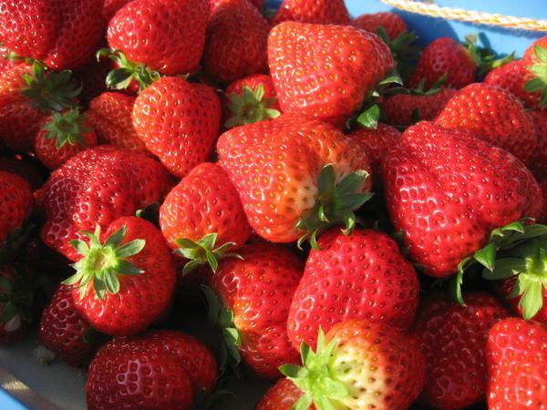 Ichigo Land Kouchan Strawberry Farm image
