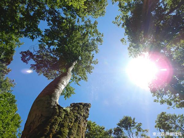 ป่าแห่งการศึกษาเรียนรู้ธรรมชาติ ดาเกะได image