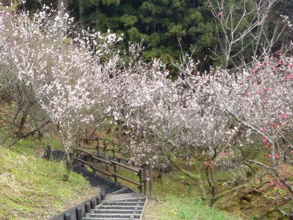 浜田森林総合公園(梅林園) image