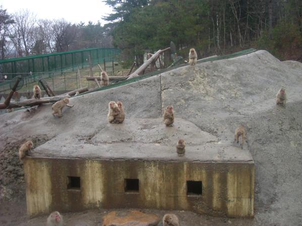 สวนลิงป่าวากิโนะซาวะแห่งเมืองมุตสึ image