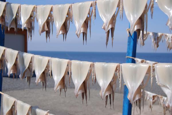 イカのカーテン(焼きイカ通り) image