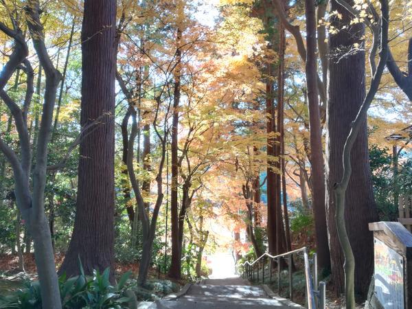 山の寺瞑想の道 image