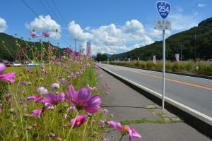 ถนนดอกดาวกระจาย (คอสมอสไคโด) image