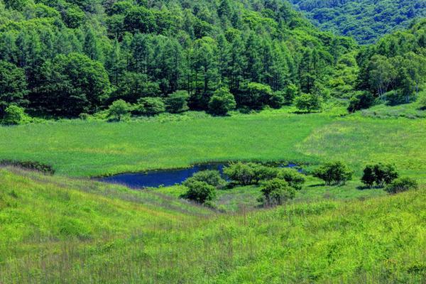 踊場湿原(池のくるみ) image