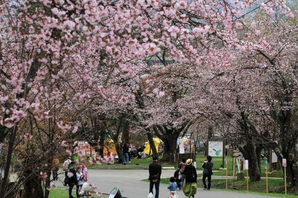 旭山公園 image
