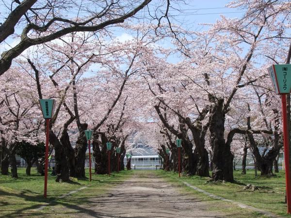 青葉ケ丘公園 image